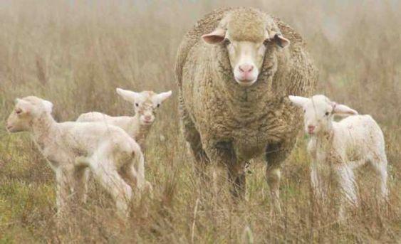 216 Sheep Christina Sinclair Salty Sam S Fun Blog For